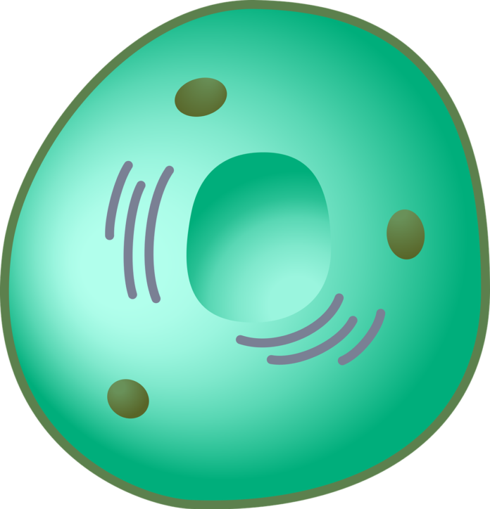 eukaryotic cell?,